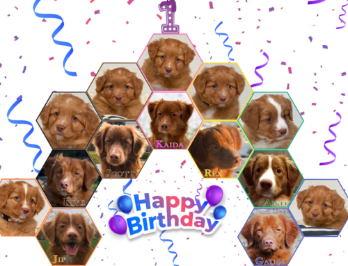 Happy Birthday Synergy Litter